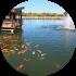 Aquaculture_Circle