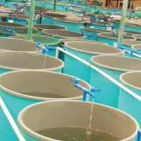Bio-Organic Catalyst Aquaculture Application