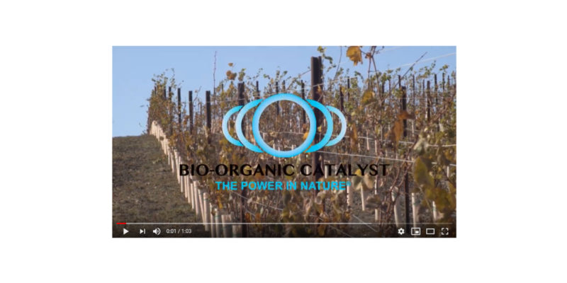 Two Year Old Vineyard Development Under Phyto-Cat Treatment