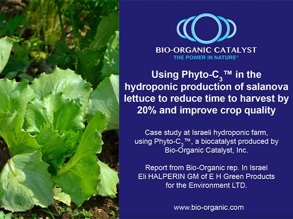 Reducing lettuce harvest time by 20%